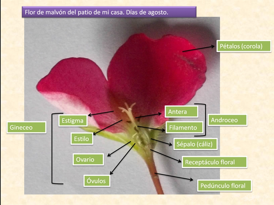 biowikidelcentro (6)