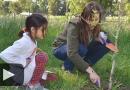 El rescate del monte frutal en Colonia Nievas