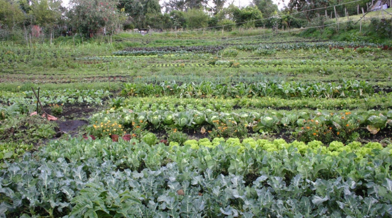 Taller sobre Agroecología Tandil 02