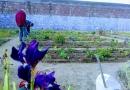 Continúan las actividades de agroyoga regenerativo en cárceles