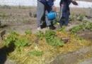 Avanzan los trabajos de huerta en la UP 2 de Sierra Chica