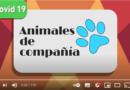Covid-19: ¿Las mascotas también deben aislarse?